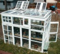 Greenhouse-From-Old-Windows.jpg